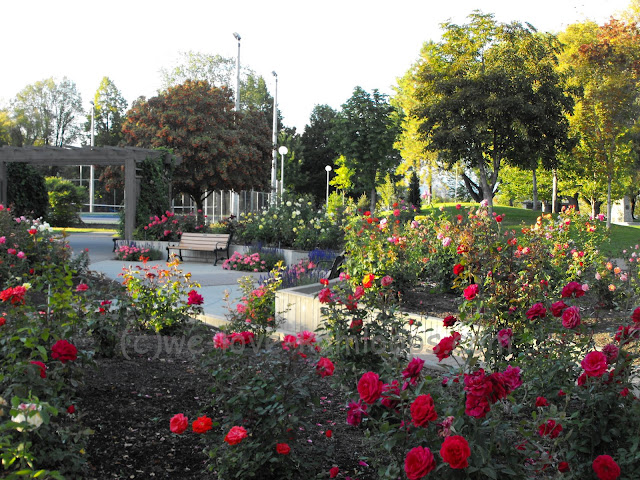 A very large rose garden sits within the Riverside Park.