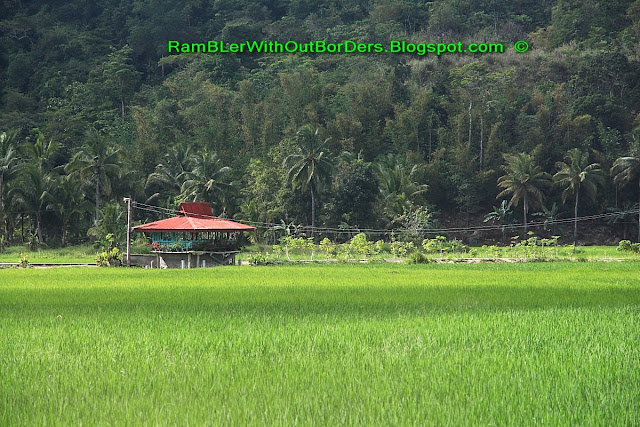 Rice paddy and Stilt house, Chocolate Hills, Bohol Island, Philippines