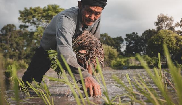 Benarkah Nasi Bisa Menangis Ketika Dibuang, Ini Jawabannya