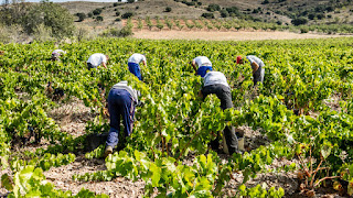 Work in Spain in agriculture for 2019