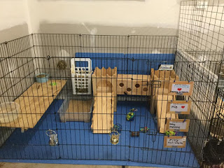 Rabbit Rescue Enclosure with Shelves