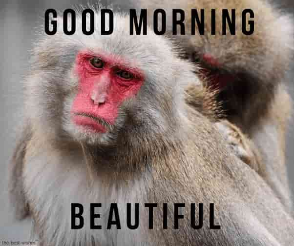 good morning beautiful monkey