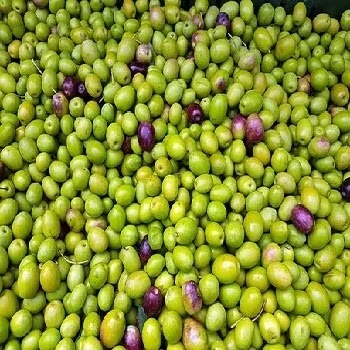 ऑलिव्ह, Olive fruits name in Marathi