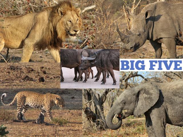 Buscando los Big 5 en el Parque Nacional Kruger