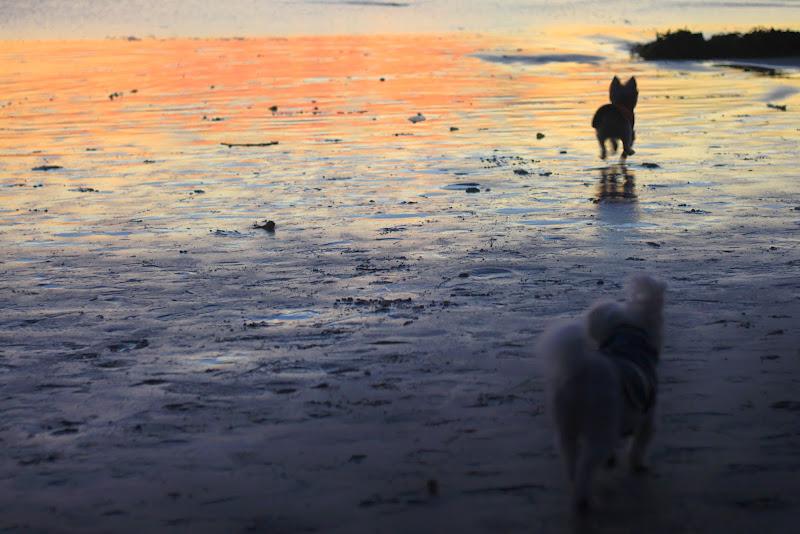 Dog Friendly Carmel Beach Carmel-by-the-Sea Weekend Getaway