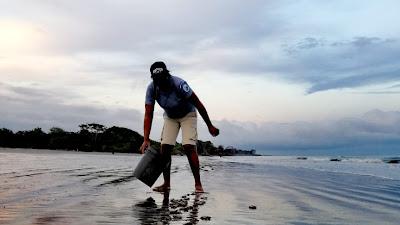 Continúa liberación de tortugas en áreas protegidas del Pacífico colombiano