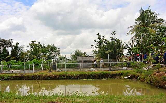 Lokasi budidaya ikan menggunakan Metode Booster di Malangan