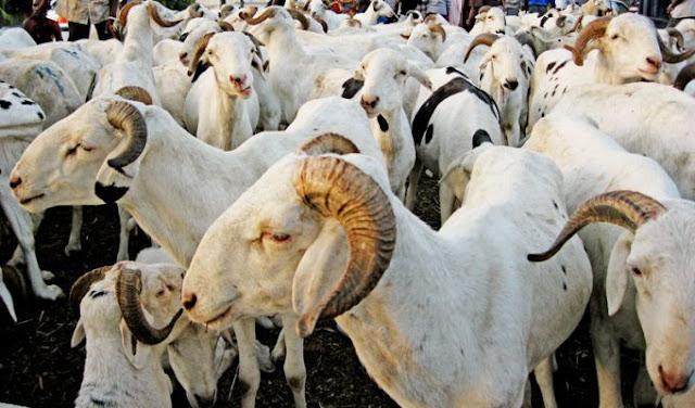Marché, viande, boeuf, mouton, abattoir, économie, commerce, animaux, cuisine, plat, repas, LEUKSENEGAL, Dakar, Sénégal, Afrique