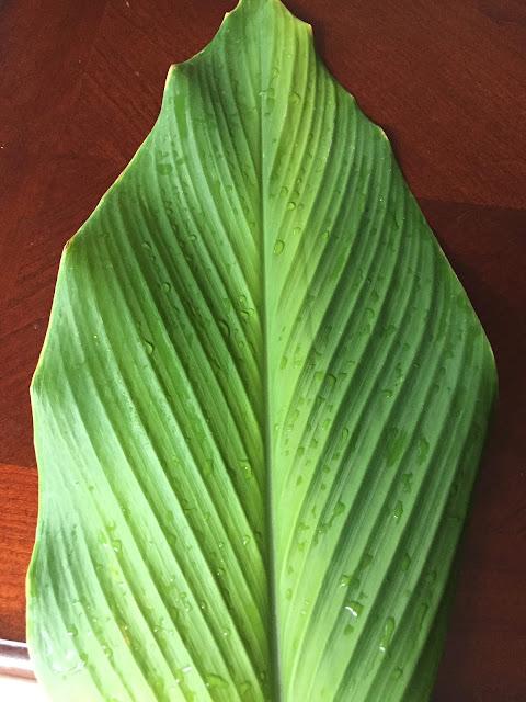Turmeric Leaf