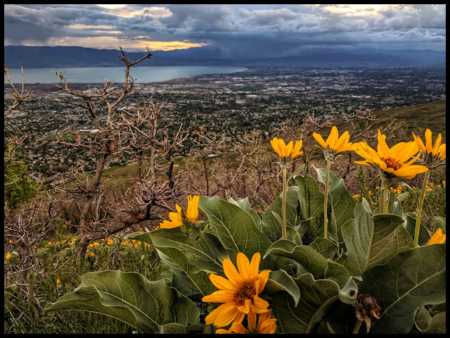 View of Wildflowers with Utah Valley and Utah Lake in the background