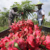Perta Arun Gas Dorong Petani Binaan Kembangkan Kebun Agrowisata
