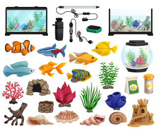 How to Clean The Fish Tank?