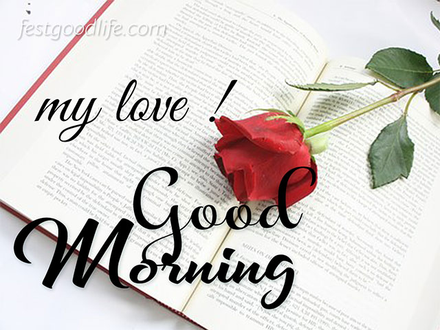 rose on book page  morning wish image download