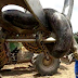 Anaconda: Το μεγαλύτερο φίδι της εποχής μας
