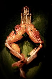 Receta de ancas de rana a la provenzal comida gastronomia francesa