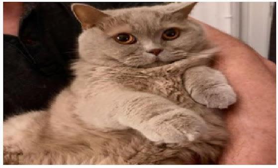 Menggendong kucing saat hamil