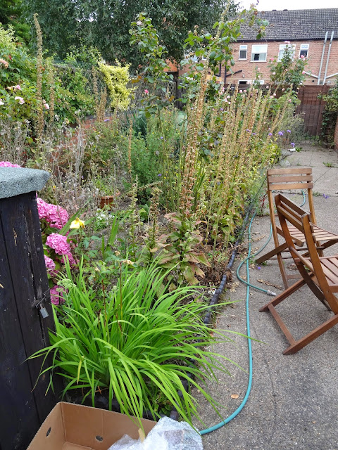 overgrown victorian terrace garden
