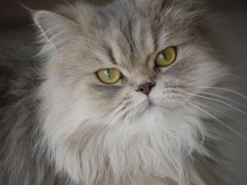 Guide to Choosing Girl Cat Names | Boy and Girl Cat Names and