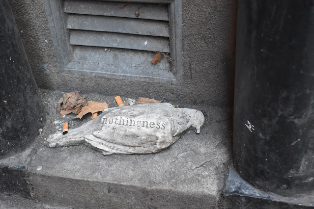 Will Cole leaves dead pigeons around Sydney