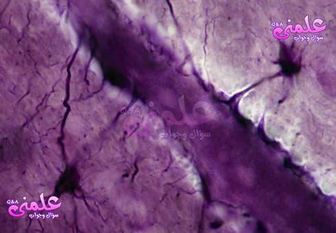 ما هو حاجز الدم في الدماغ ( blood brain barrier ) ؟