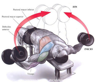 The best dumbbell chest exercises all for Aparatos para hacer ejercicio