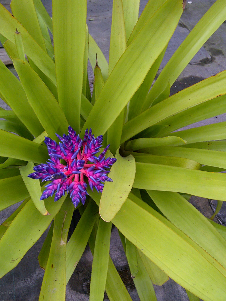 Bromeliads How To Keep The Color Going: The Rainforest Garden: Acres Of Bromeliads At The