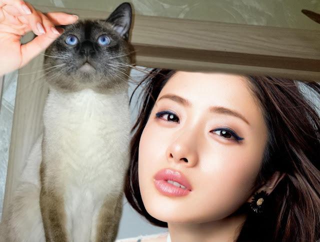 Японка гладит выставочного кота тайской породы автора статьи [фотоколлаж]