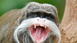 Con vật nào khiến những người trông coi vườn thú cho là nguy hiểm nhất?