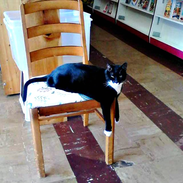 book buyers library cat charlotte