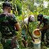Bersama masyarakat perbatasan TNI memanen jagung
