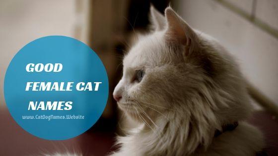 Good Female Cat Names, cat names