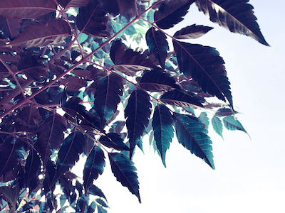 Tree leaves from below stock image