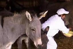 هل تعلم ان جبن الحمير Donkey cheese هو الاغلى عالميا !!