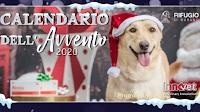 Calendario dell'Avvento Innovet 2020 : apri gratis tutte le caselle per contribuire a donare 10.000 euro a un Rifugio per Cani