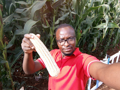 Aggregation of small scale farmers in Kenya  holds the future of farming. By adopting  aggregation, small scale farmers can achieve scale economies.