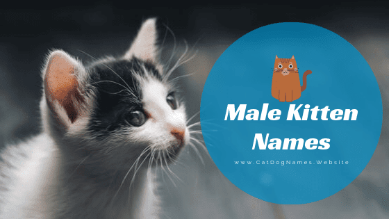 Male Kitten Names For Unique, Funny And Cool Names List