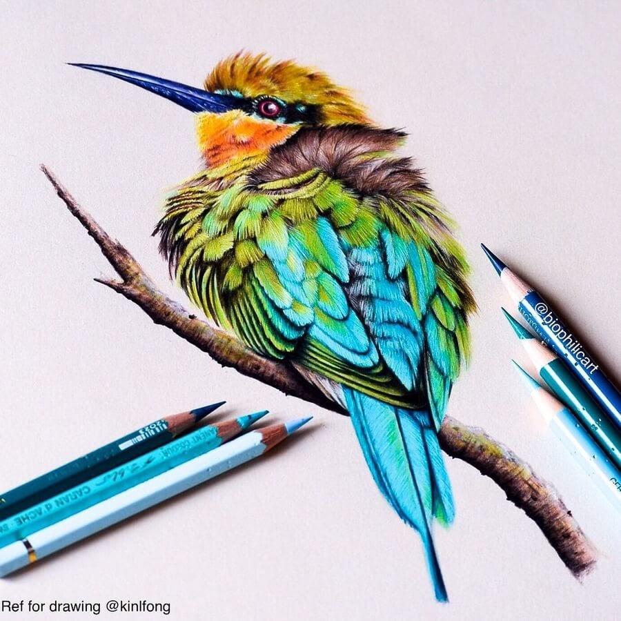 06-Little-Bee-Eater-Sallyann-www-designstack-co