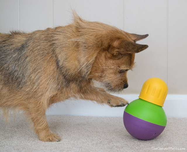 Mini Review: StarMark Bob-A-Lot Interactive Dog Toy