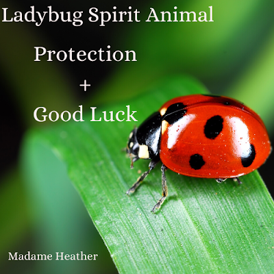 Ladybug medicine