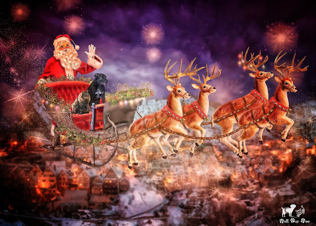 Flying with Santa (©Jenny Bell @ Bell Fur Zoo)