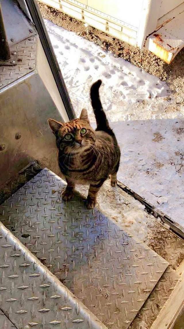funny-cat-297-01 Funny cats - part 297 (40 pics + 10 gifs)