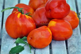 http://tomatprat.blogspot.no/2014/10/big-italian-plum.html