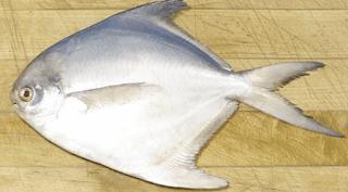 Pomfret Fish in Tamil