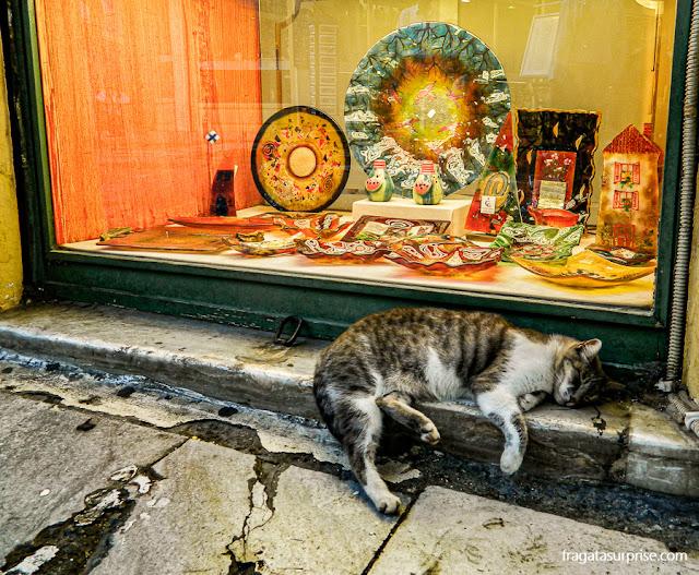 Cena ateniense: um gatinho dorme alheio ao movimento dos turistas