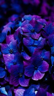 Flowers Mobile HD Wallpaper