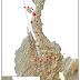 Jejak Sejarah Gempa dan Tsunami Di Sulawesi