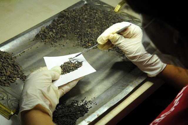 4,500-year-old grain seeds found in eastern Turkey