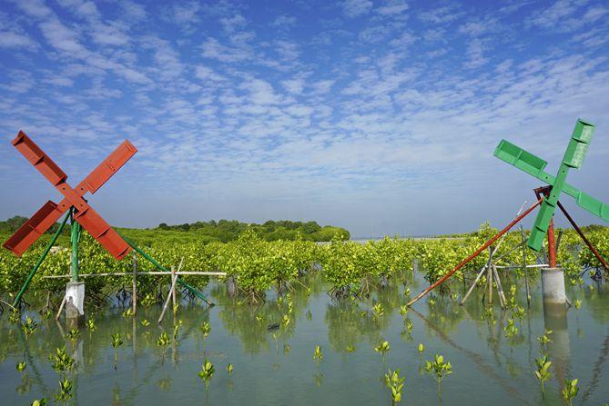 Kincir tradisional warna-warni di Mangrove Rembang