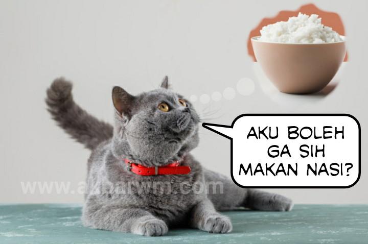 Apa kucing boleh makan nasi
