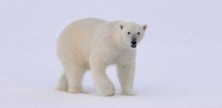 arti kata arktik
